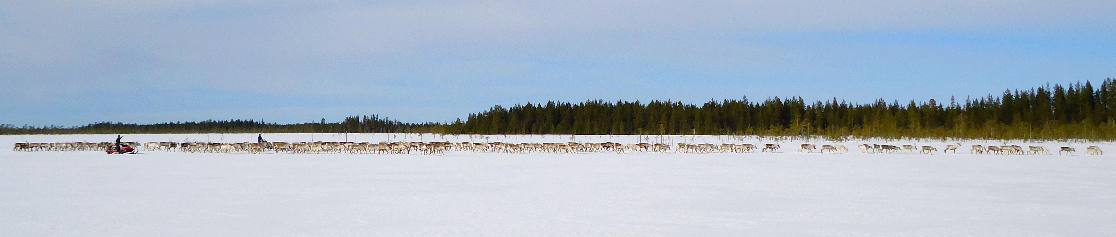 Pitkä pororaito talvisessa maisemassa.